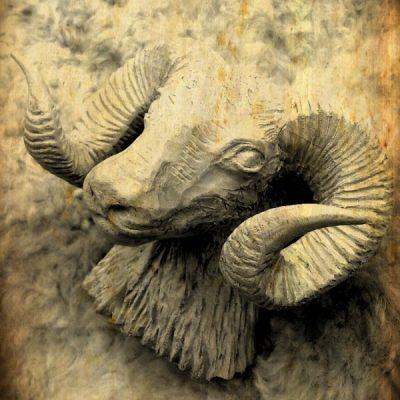 Baran a ovca
