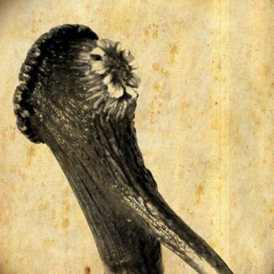 Palica - srnec